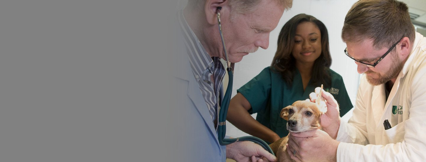 Associate of Applied Science (AAS) in Veterinary Technology
